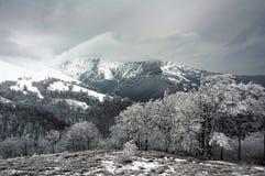 喀尔巴阡山脉 图库摄影