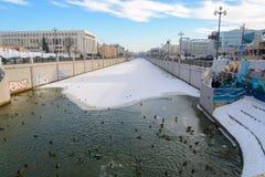 喀山,共和国鞑靼斯坦共和国,俄罗斯 在水的鸭子 免版税图库摄影