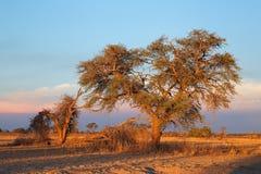 喀拉哈里沙漠风景-南非 库存图片