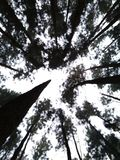 喀拉拉旅游业森林WAGAMON MUNNAR伊杜克克镇 免版税库存图片