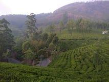 喀拉拉旅游业茶庄园WAGAMON MUNNAR伊杜克克镇 免版税库存照片