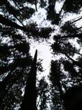 喀拉拉旅游业WAGAMON击倒树MUNNAR伊杜克克镇 库存图片