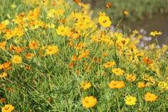 喀拉拉的庭院视图 免版税库存照片