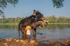 喀拉拉,印度- 1月, 12 :沐浴在Kodanad trainin的大象 免版税库存照片
