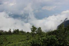 喀拉拉munnar茶庄园 免版税库存图片