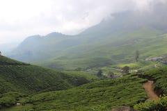 喀拉拉munnar茶庄园 库存照片