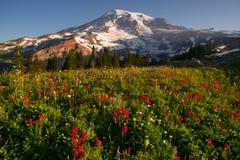 喀斯喀特山脉更加多雨的国家公园山天堂草甸 库存照片
