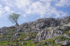 喀斯特地形(四国石灰岩地区常见的地形) 免版税库存照片