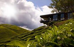 喀麦隆高地 库存图片