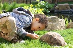 喂养他小的草龟的男孩 免版税库存图片