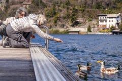 喂养在船坞的美好的成熟夫妇鸭子 免版税库存图片