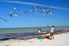 喂养墨西哥海鸥儿子的海滩父亲 免版税库存照片