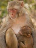 喂养她的短尾猿的婴孩 免版税库存照片