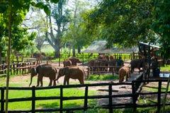 喂养婴孩大象用牛奶的工作者 库存图片