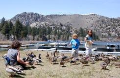 喂养现有量孩子的3只鸭子 免版税库存照片