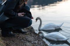 喂养美丽的天鹅的少女在有反射的湖 免版税库存图片