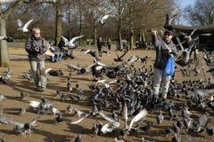喂养鸟在海德公园,伦敦,英国 免版税库存照片