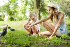 喂养鸟的两个逗人喜爱的妹在夏日 喂养鸽子和鸭子的孩子户外 库存照片