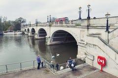 喂养waterbirds和天鹅的游人在河沿步行的金斯敦桥梁由泰晤士河散步在金斯敦,英国 库存图片