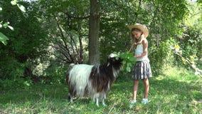 喂小孩山羊在庭院,吃草动物的农夫女孩里在庭院4K里 影视素材
