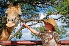 喂小孩长颈鹿 库存照片