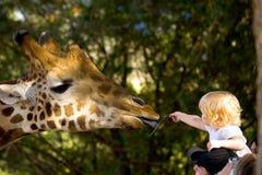 喂小孩长颈鹿 图库摄影