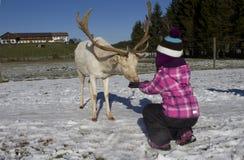 喂小孩鹿在冬天 库存图片