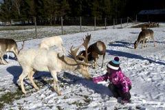 喂小孩鹿在冬天 免版税库存照片
