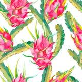 喂无缝夏威夷的模式 异乎寻常的叶子和果子 向量 Dragonfruit, pitaya, pitahaya Pitaya是植物  免版税库存图片