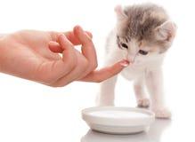 喂养一只小猫! 库存照片