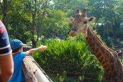 喂养一头长颈鹿的男孩在Dusit动物园里 曼谷泰国 免版税库存照片