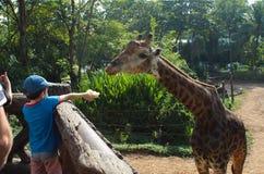 喂养一头长颈鹿的男孩在Dusit动物园里 曼谷泰国 库存图片