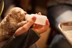 喂养与瓶的一只小狗 免版税库存图片