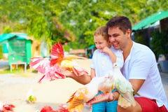 喂养在动物农场的激动的家庭五颜六色的鸽子 免版税库存照片