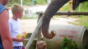 喂养大象香蕉的孩子 股票视频