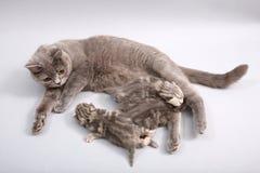 喂养她的婴孩的猫 免版税库存图片