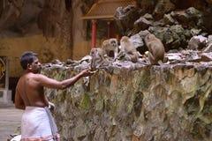 喂养猴子 免版税库存图片