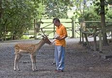 喂养小鹿的男孩。 库存照片