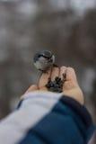 喂养从手的人一只鸟 免版税图库摄影