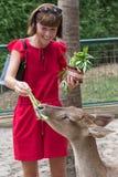喂养从手的愉快的youngwomanl美丽的鹿在一个热带巴厘岛动物园公园,印度尼西亚 库存图片
