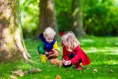 喂养灰鼠的孩子在秋天公园 库存图片