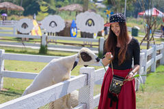 喂养绵羊的可爱的少妇 免版税库存照片