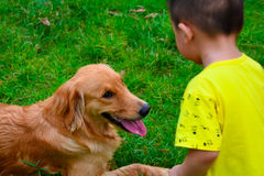 喂养金毛猎犬狗的孩子 图库摄影