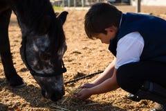喂养马的男孩在大农场 免版税库存图片
