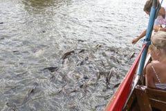喂养鱼的孩子在曼谷河 库存照片