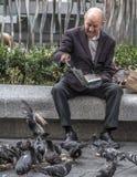 喂养鸟 免版税库存图片