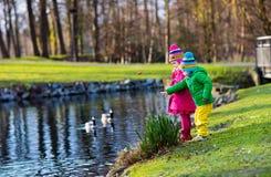 喂养鸭子的孩子在秋天公园 免版税库存图片