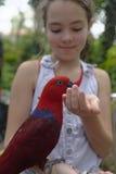 喂养鹦鹉的女孩 免版税图库摄影
