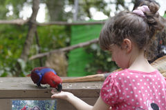 喂养鹦鹉的女孩 免版税库存图片