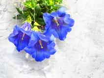 喇叭植物 库存图片